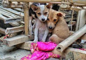 sad puppies_cropped
